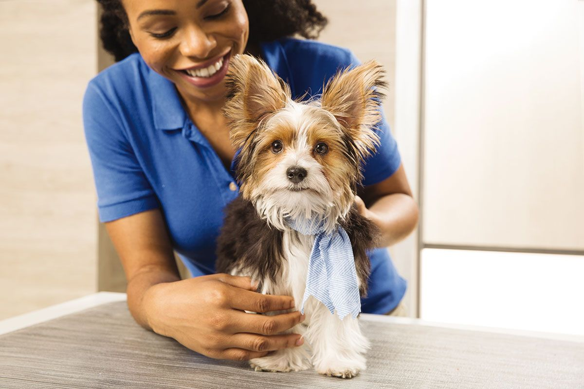 Is It Time For A New Look Stop Into The Petsmart Grooming Salon For A Fresh Do Petsmart Grooming Cat Grooming Dog Grooming