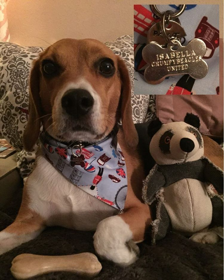 London Calling To The Underwold Beagle Pets Instagram Posts