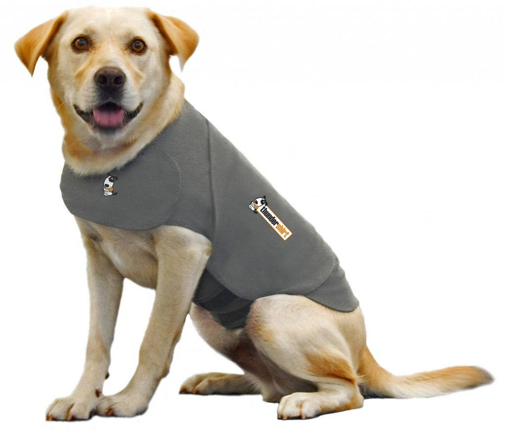 thundershirt dog coat for dogs with anxiety