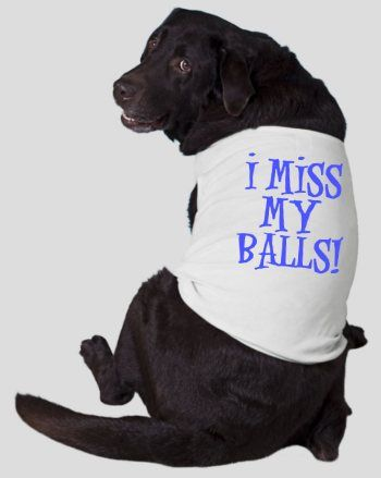 I Miss My Balls Funny Dog T Shirt 15 99 Masen Needs This Shirt