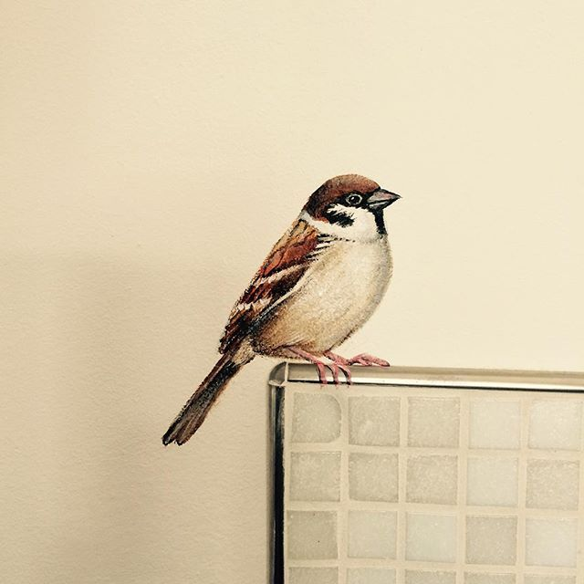 Mus sparrow pinterest walls wall papers and interiors mus sparrow altavistaventures Images
