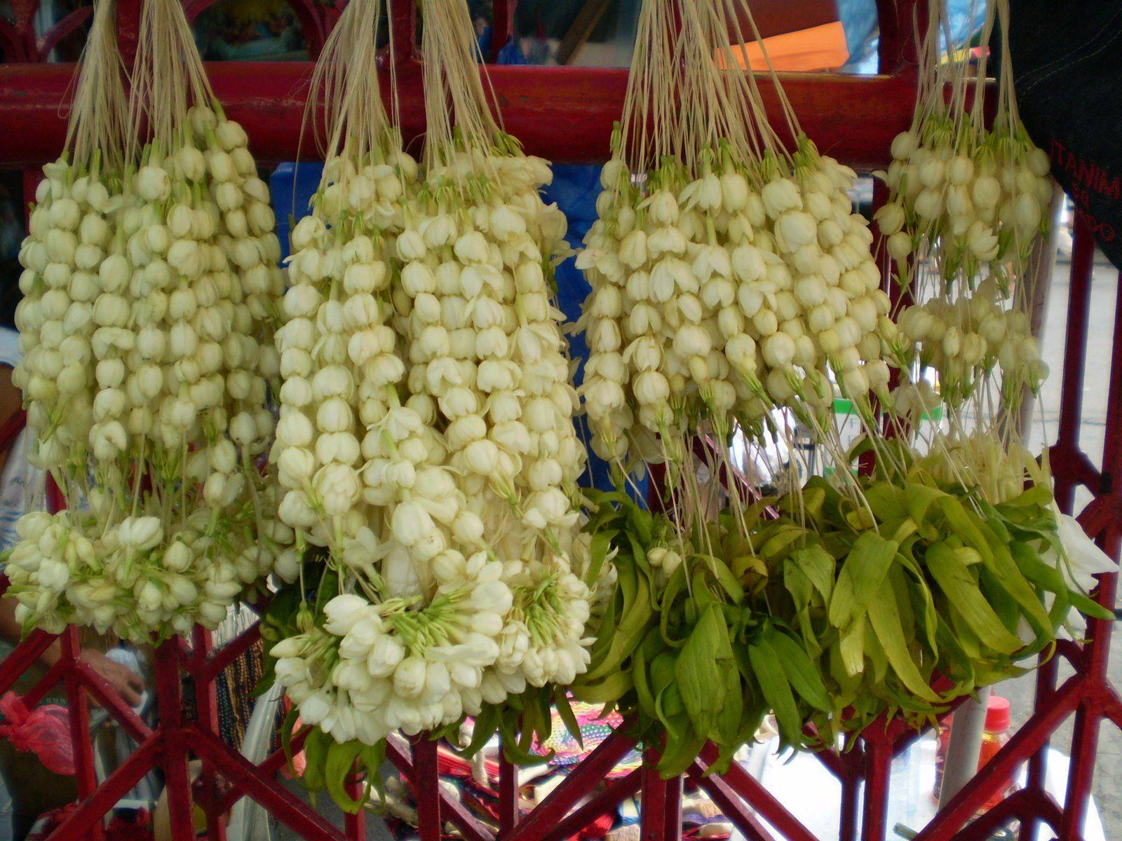 187 best flowers jasmines images on pinterest plants flowers and garlands of jasmine flowers izmirmasajfo Gallery