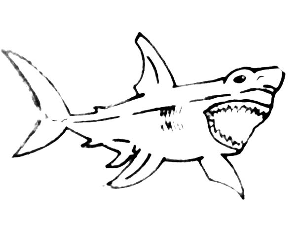 sketch of jaws coloring pages  best place to color di