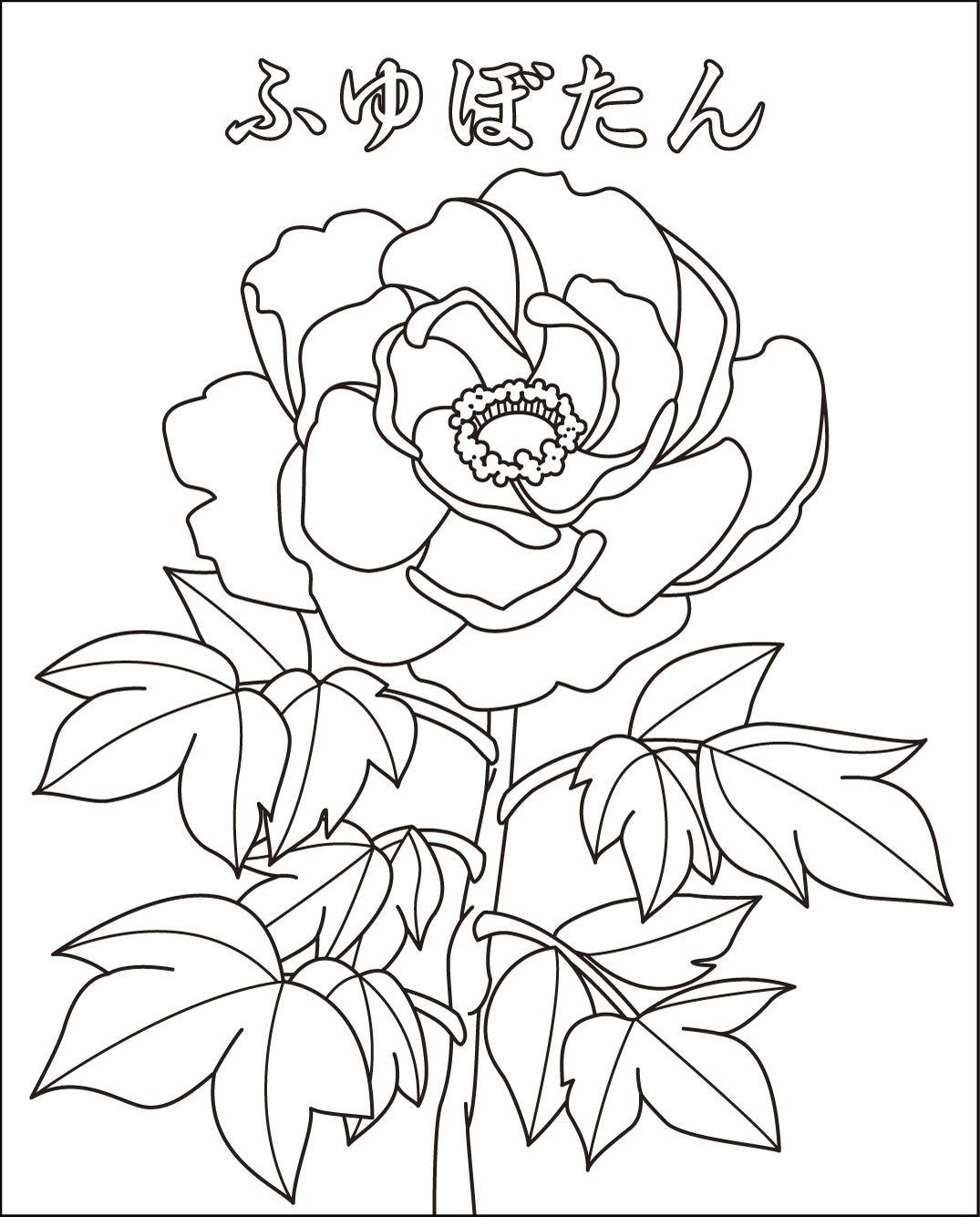無料の印刷用ぬりえページ ベスト 塗り絵 無料 花 塗り絵 無料 塗り絵 無料 花 塗り絵