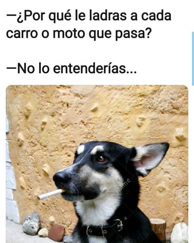 Recomendaciones Tumblr Memes Espanol Graciosos Chistes Whatsapp Memes Memes Divertidos