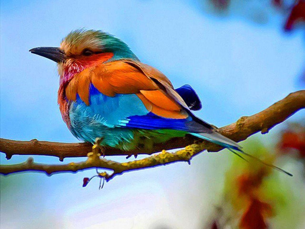 Colorful Bird Photography Colorful Birds Photo 4 Birds