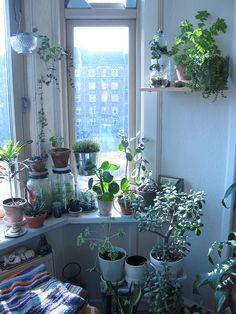 plants... I like!!