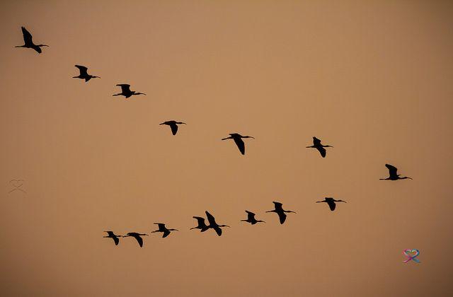 Sunset, Birds