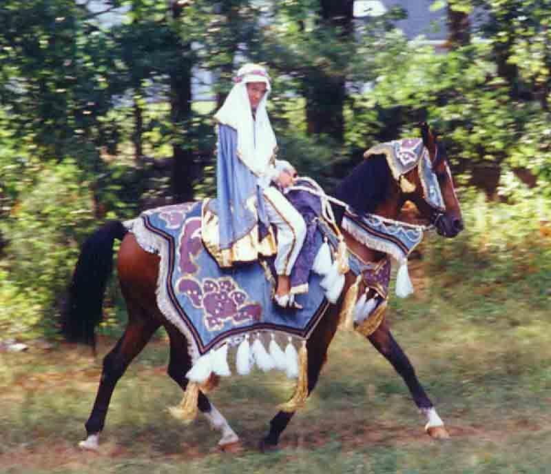 arabiannativecostumehorselg.jpg | Arabian Nights ...