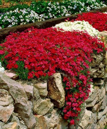 Photo of The Perfect Rock Wall Landscaping Plants ~ Bless My Weeds