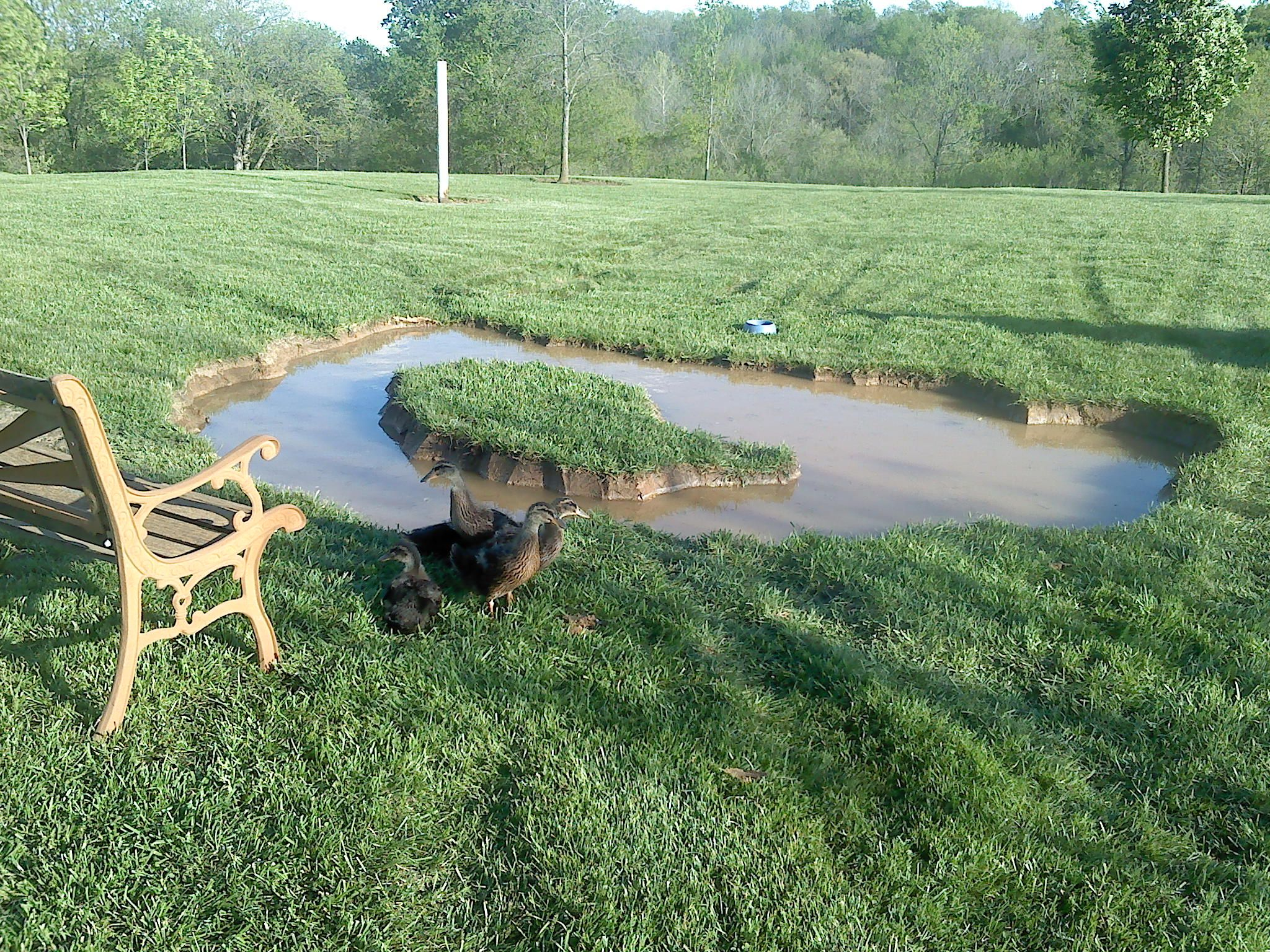 Backyard duck pond created in a weekend could be finished for Building a pond with liner