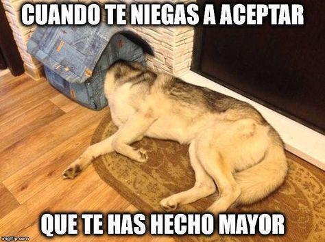 Date Un Relax Con Estos Memes De Animales La Voz Del Muro Humor De Perros Fotos De Perros Graciosas Memes De Animales