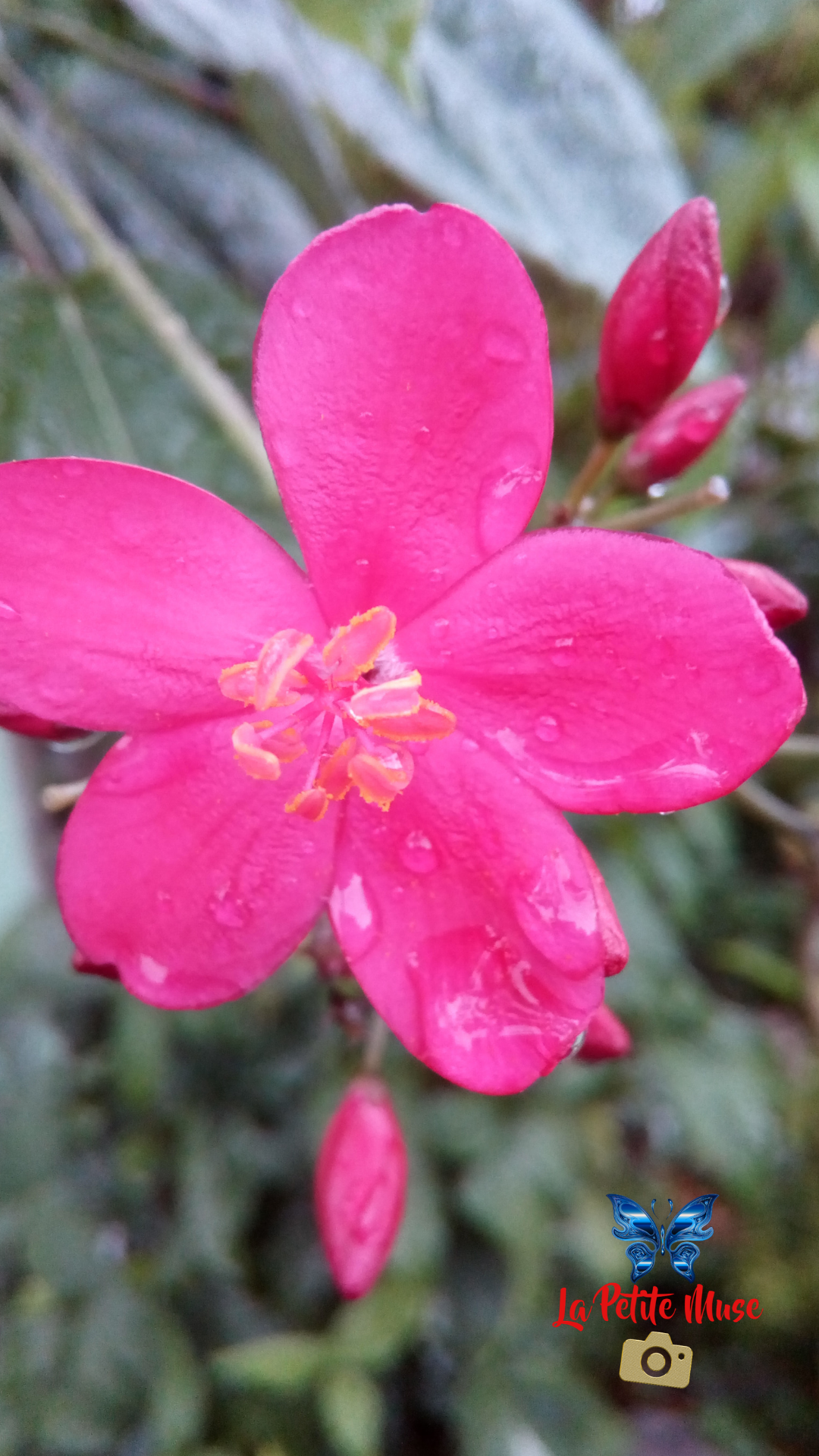 Raindrops on pink flower 🌸