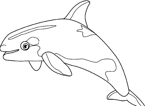 Pin On Whale Coloring Page
