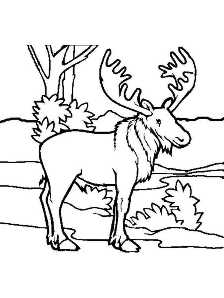 Moose Head Coloring Pages Animal Coloring Pages Moose Head Coloring Pages