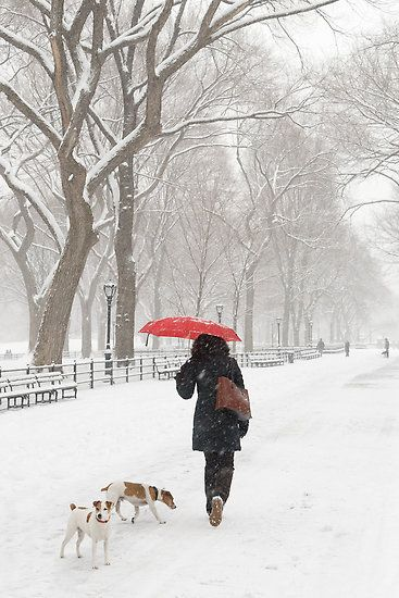 NY, red, umbrella, winter