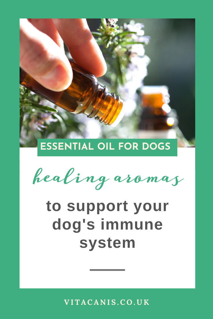 Healing Aromas in 2020 Essential oils dogs, Dog health