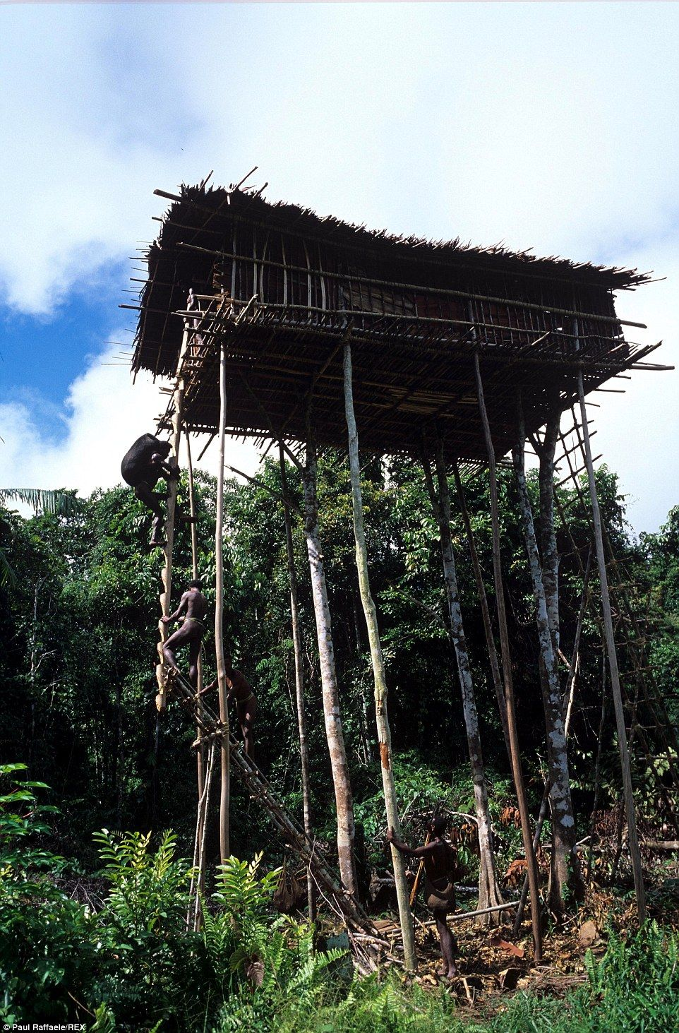 Meet the Lost Treehouse tribe of New Guinea | house | West papua