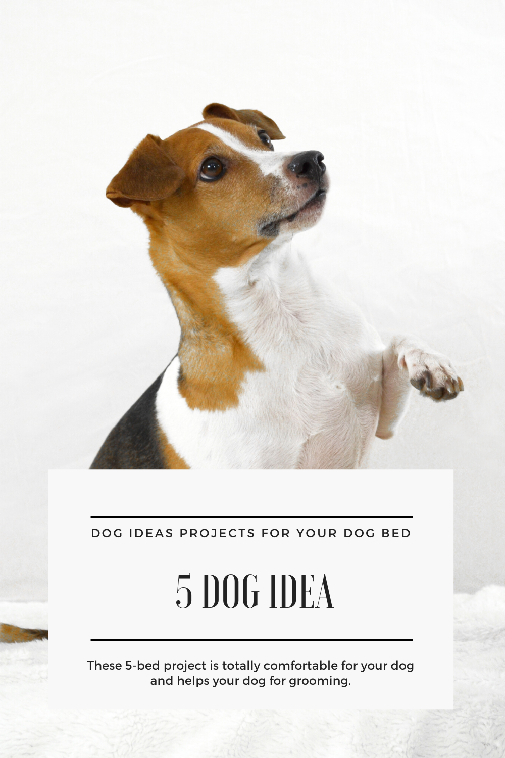 5 Best Bed Dog Idea Projects In 2020 Dog Spay Dog Health Dogs
