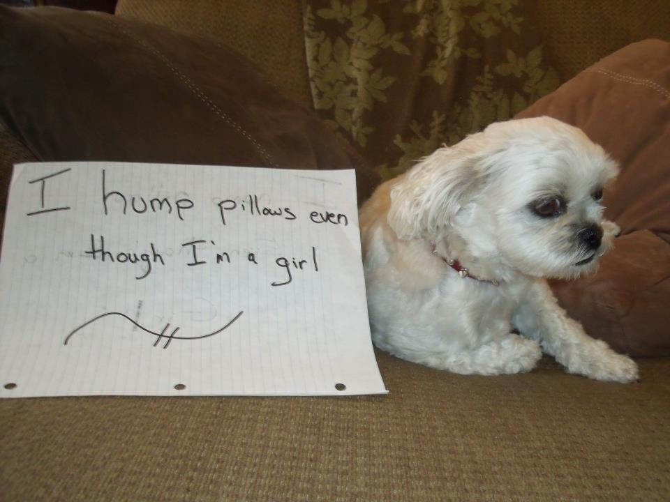 Dog Shaming Girl Dog Humps Pillows