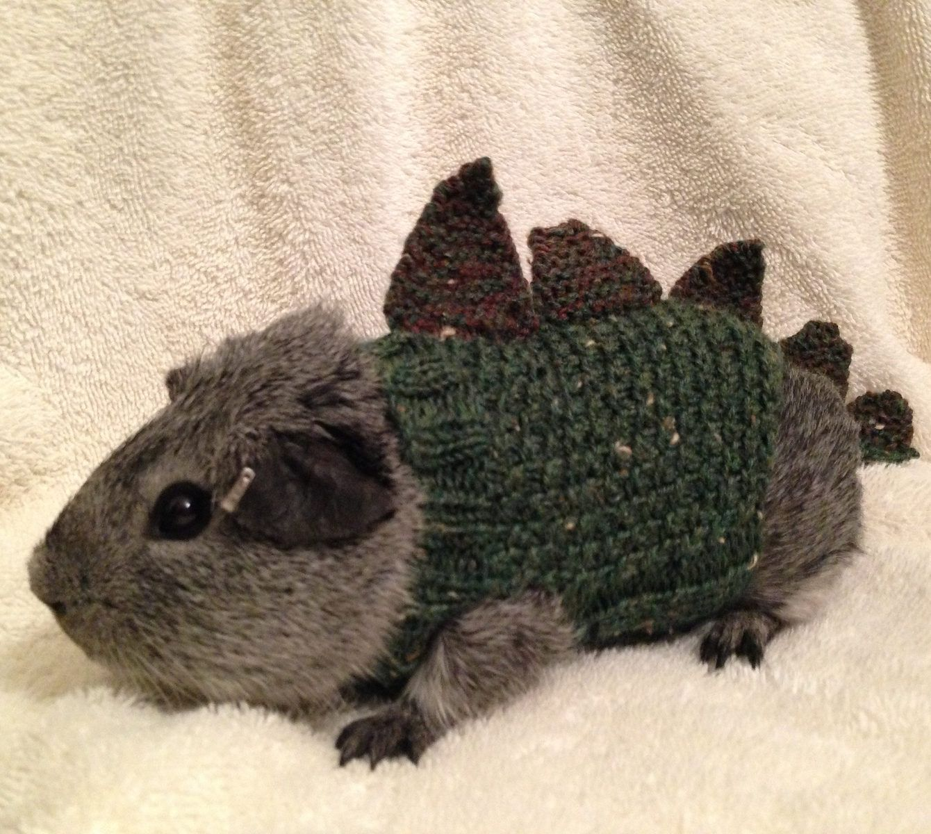 Free Knitting Pattern For Cavysaurus Rex Pet Costume Spinknitup