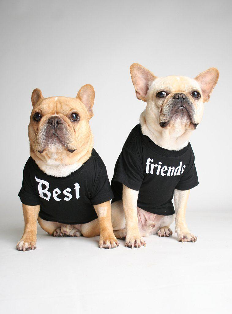 Pet lover pins fur babies dog mom cat mom corgi pug frenchie dog lover cat lover cute gift