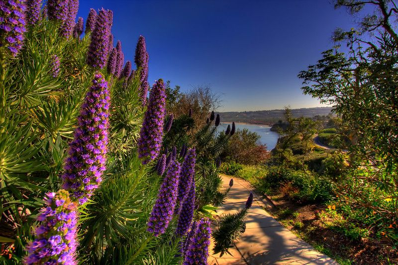 The Path Leading To La Jolla Cove Could Easily Be Called The Path To Paradise Visit San