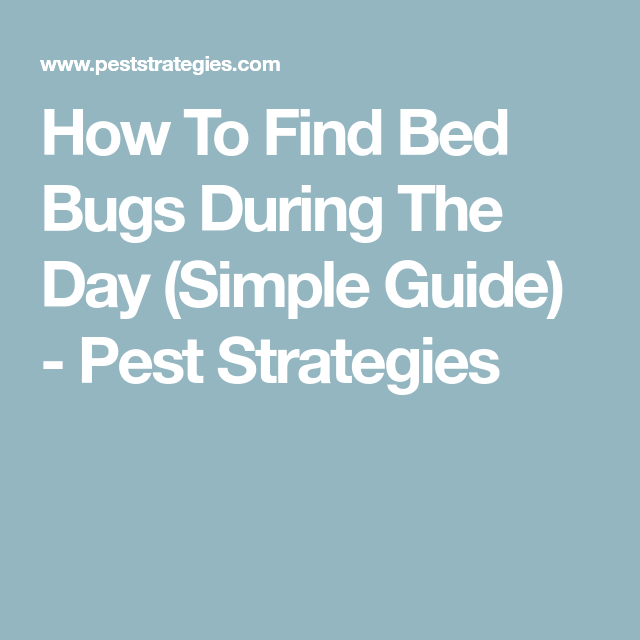 How To Find Bed Bugs During The Day Simple Guide Pest Strategies Bed Bugs Bed Bugs Infestation Bugs