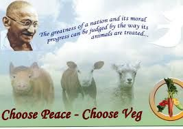 love all beings - Google Search