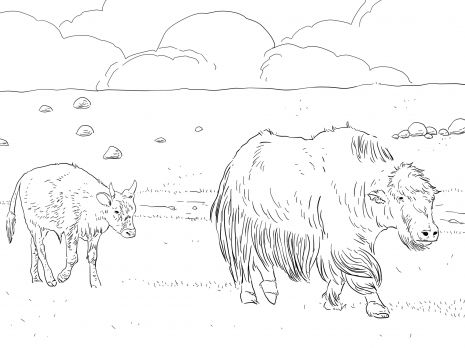Yak Mother With Calf Coloring Page Super Coloring Animal Coloring Pages Yak Coloring Pages