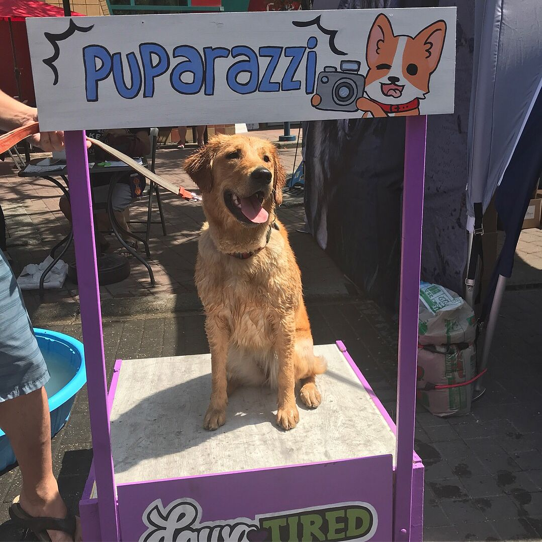 Pet A Palooza Was So Much Fun Maybe Next Year I Can Try Some