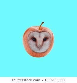 Contemporary art collage. Concept apple owl on blue background. #abstract, #animals, #apple, #art, #artwork, #abstract #anim #Apple #Art #background #Blue #collage #Concept #Contemporary #Eating Organic art #Eating Organic before and after #Eating Organic benefits #Eating Organic recipes #Eating Organic sign #owl