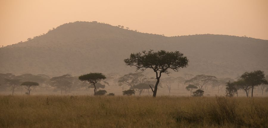 Serengeti at Dawn by Betty Sederquist on 500px