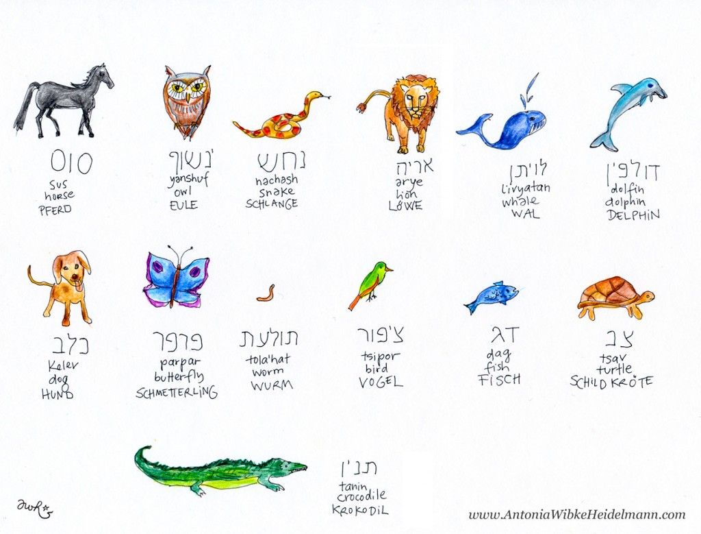 Hebrew animals jewish day school pinterest language and school hebrew animals biocorpaavc Gallery