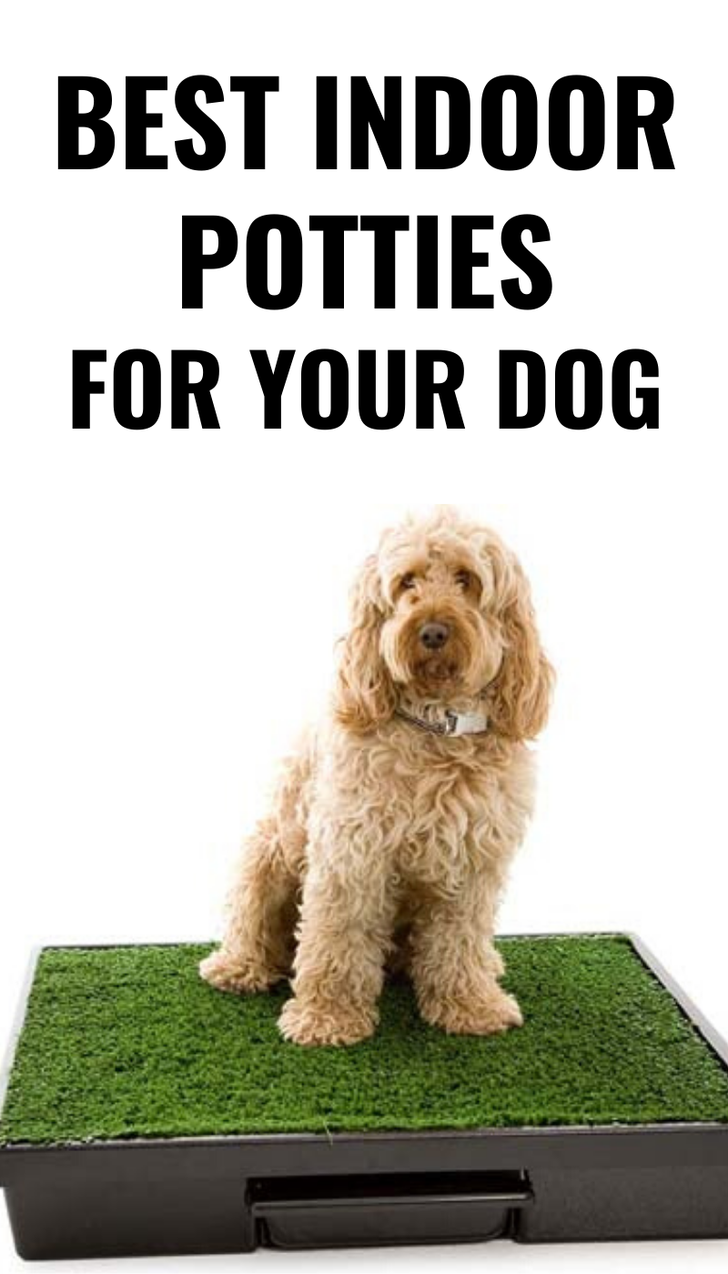 Best Indoor Potties For Your Dog Dog Potty Dog Potty Area Indoor Dog Potty