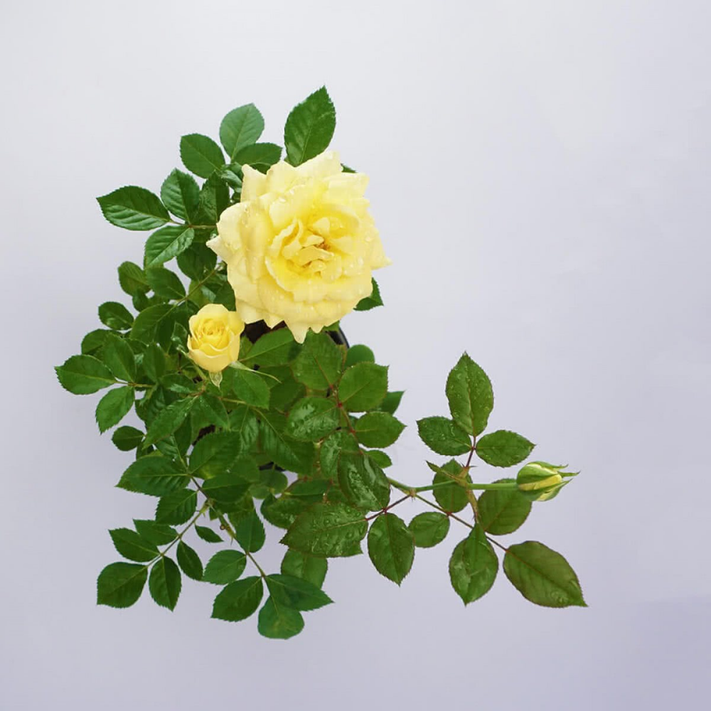 Pin On Flowers Photos Illustrations And More