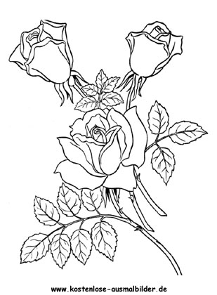 ausmalbild rosen zum kostenlosen ausdrucken und ausmalen