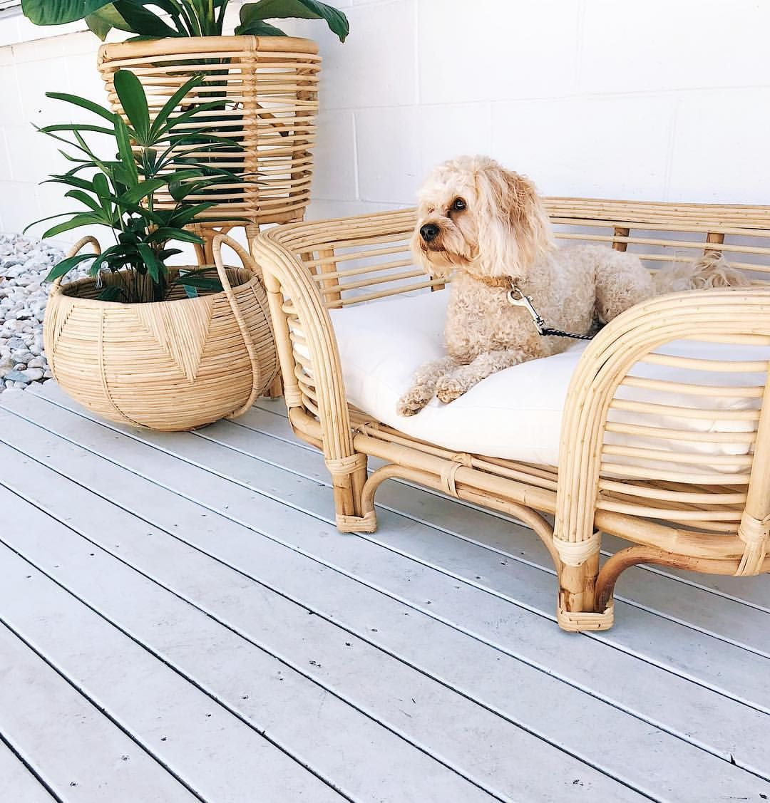 Pin by Christine SweetkoSmith on Pet Love Dog bed