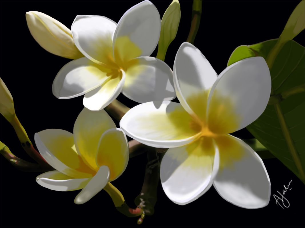 Whats The Name Of This Flower They Remind Me Of Home And Smell