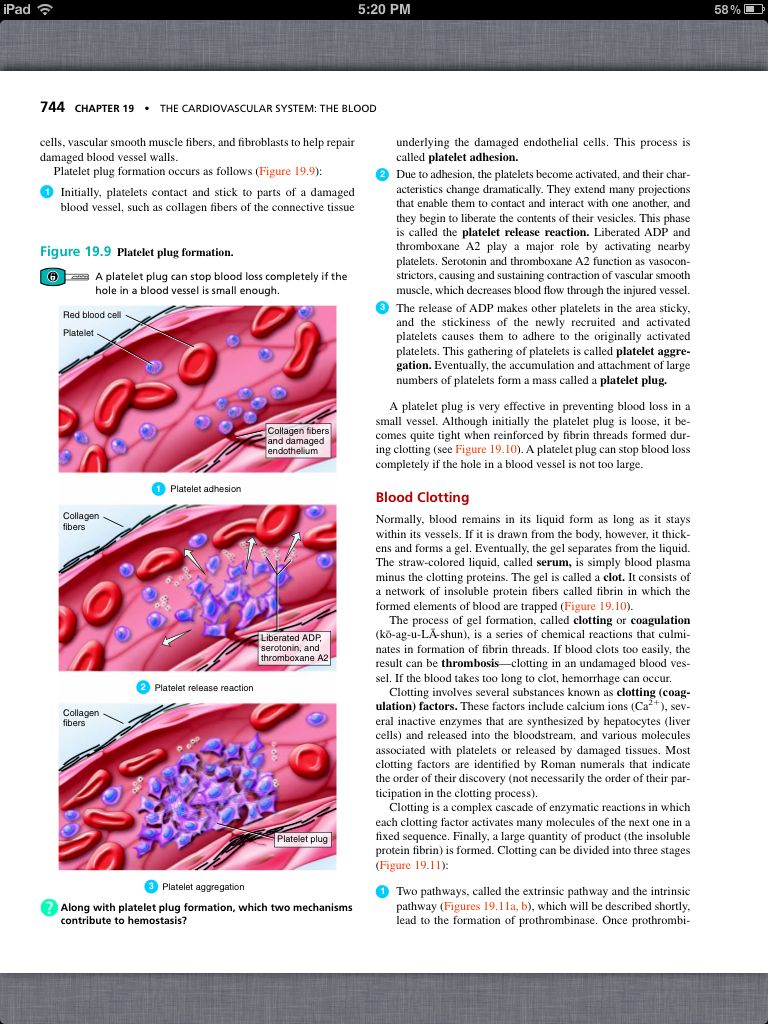 Principles of Anatomy and Physiology, Chapter 19, The Cardiovascular ...