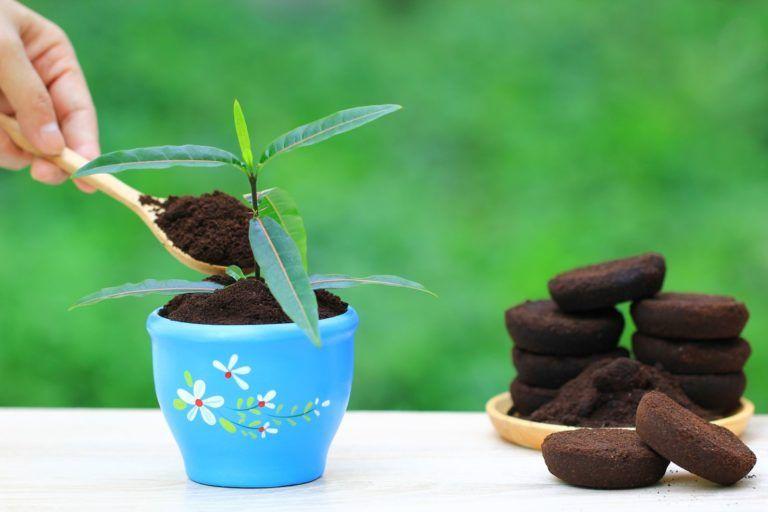 Kaffeesatz Als Dunger Verwendung Vorteile Des Hausmittels Plantura Kaffeesatz Dunger Fur Tomaten Zimmerpflanzen