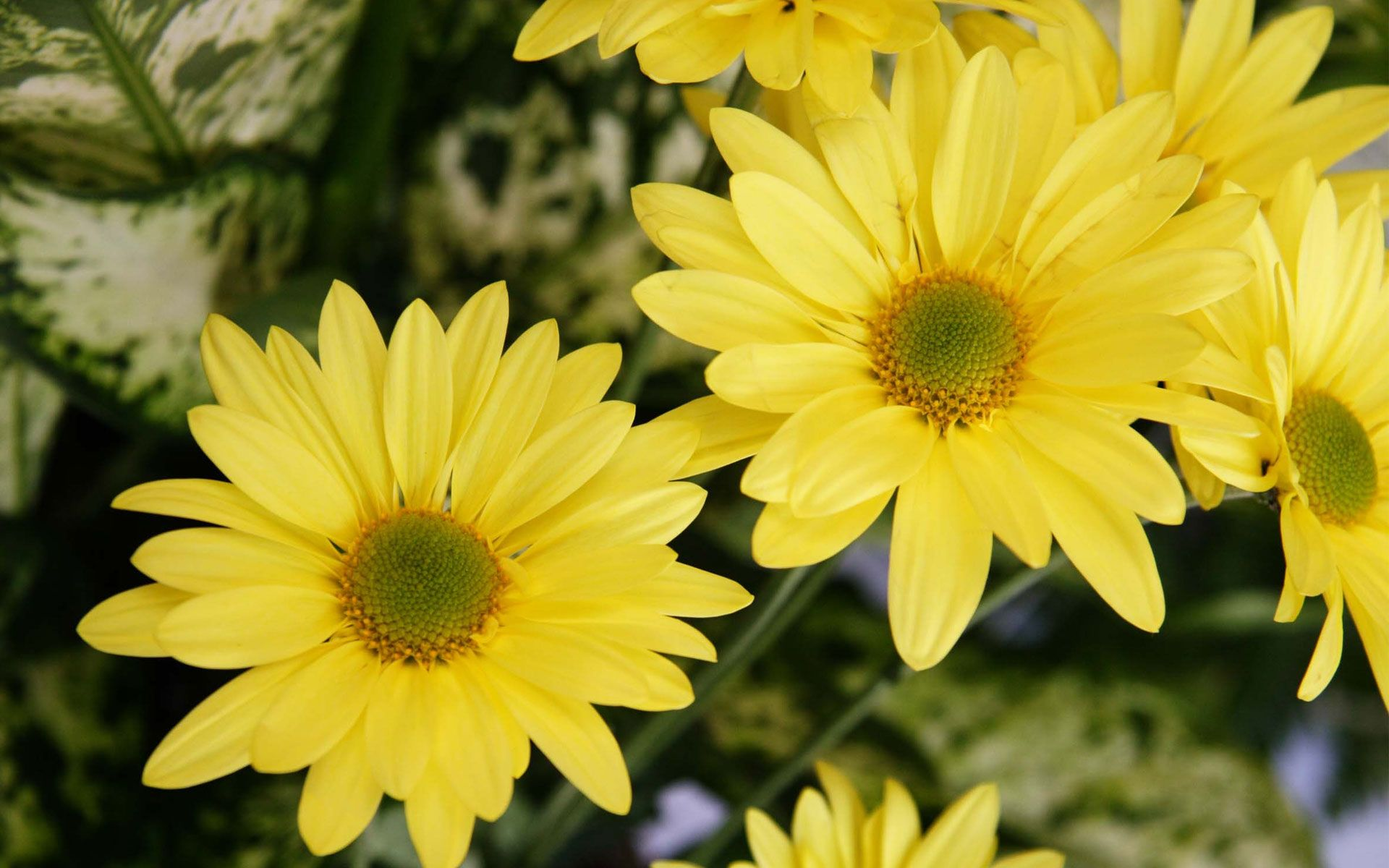 Yellow Flowers Wallpapers Flowers Color Yellow Flower Walls