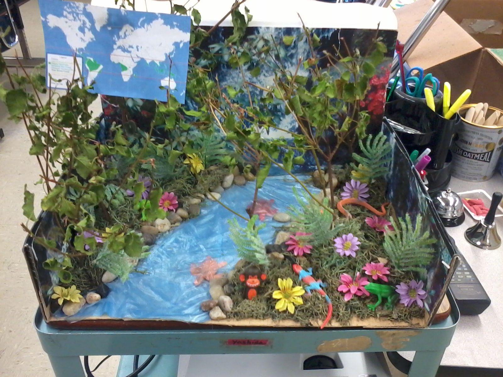 Tropical rainforest biome project diorama pinterest for 3d cuisine boe