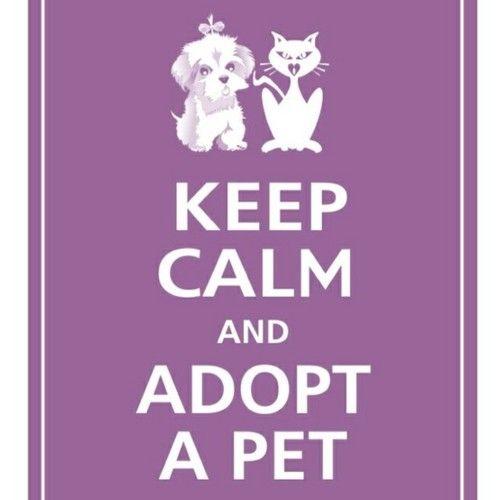 Nurses Who Adopt Dogs