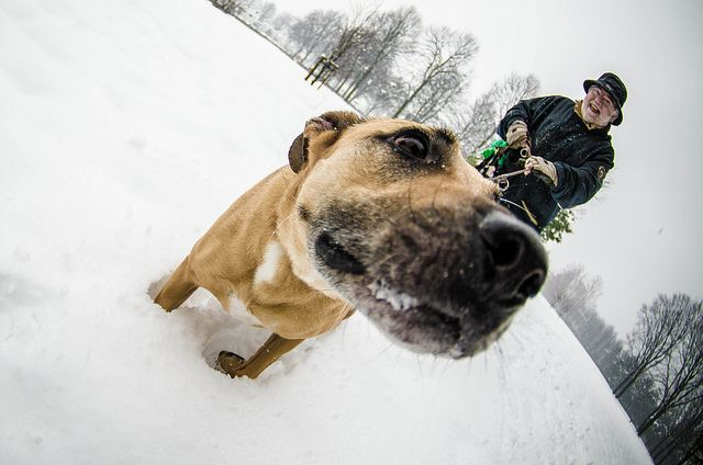 Subzero Dog    Like, Repin, Follow :)