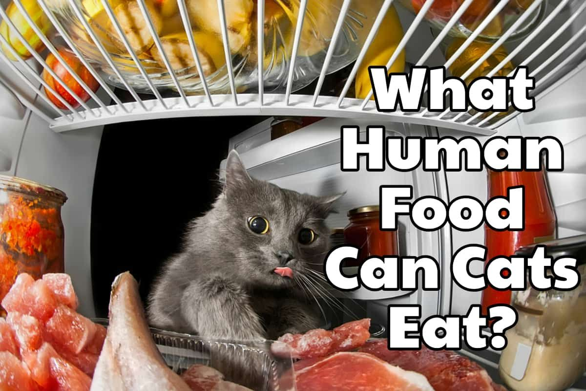 "A FelineFriendly Guide To ""People Foods"" What Human Food"