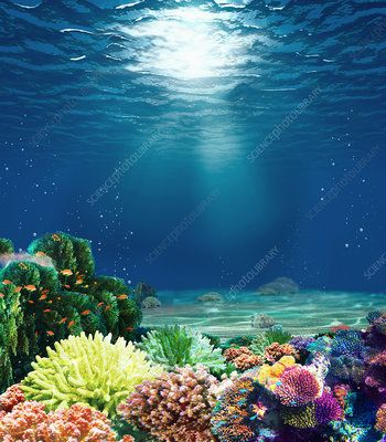 Coral reef with sunbeam, illustration - Stock Image - C039/5343