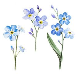 Photo of Set Branch Forgetmenot By Watercolor On Stock Illustration 606392678