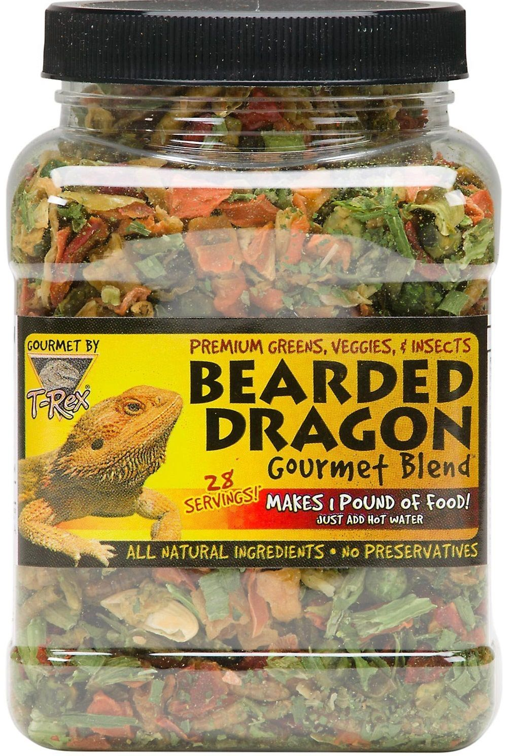Bearded dragons scientifically known as pogona vitticeps