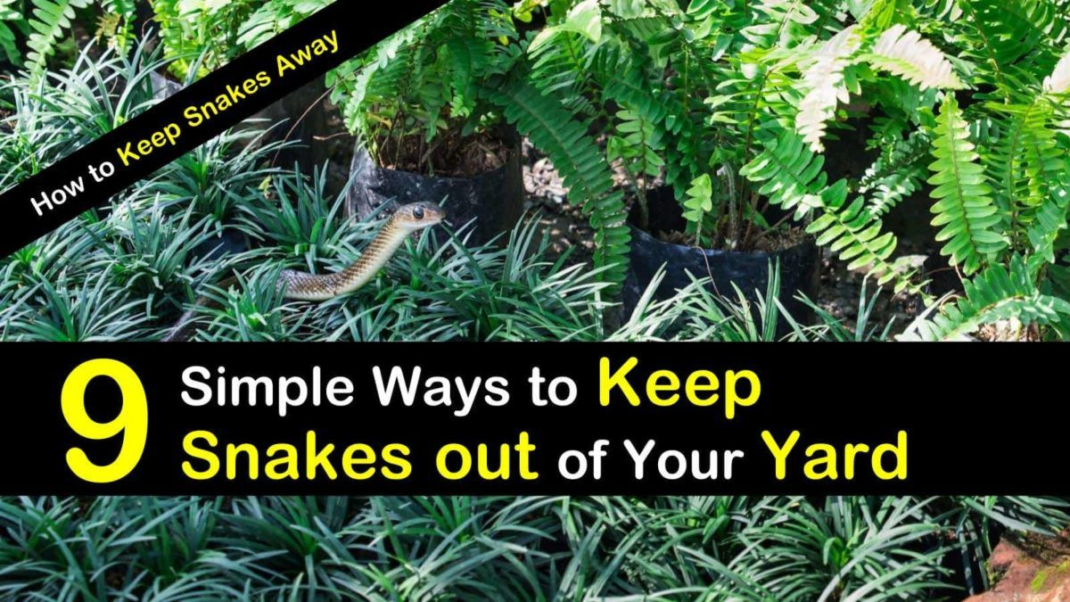 9 Simple Ways To Keep Snakes Out Of Your Yard How To Keep Snakes